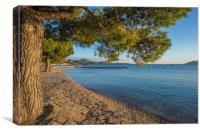 The Pine Walk, Puerto Pollensa, Canvas Print