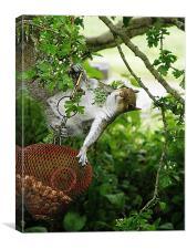 Acrobatic Squirrel, Canvas Print