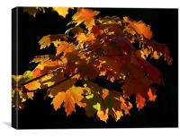 Autumn Light, Canvas Print