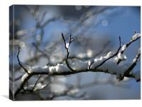 Snowy Branch, Canvas Print