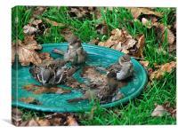 Autumn Bird Bath, Canvas Print
