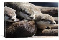 Sleepy Otters, Canvas Print