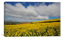 Rapeseed field near Shaldon Devon, Canvas Print