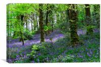 Bluebells Woods near Denbury Devon, Canvas Print