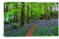 Walkway through the Bluebell Woods, Canvas Print