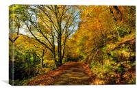 Autumn at Kilminorth Woods Looe, Canvas Print