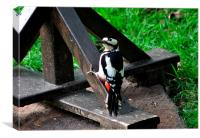 Greater Spotted Woodpecker on the bird table, Canvas Print