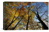 Looking up at the autumn trees, Canvas Print