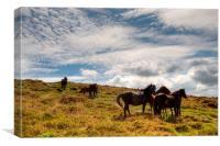 Ponies on Dartmoor, Canvas Print