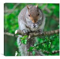 Squirrel enjoying nuts on the bird feeder, Canvas Print