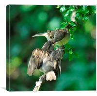 Mother and fledgling sparrow, Canvas Print
