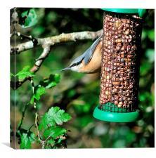Nuthatch on Nut feeder , Canvas Print
