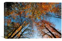 Looking up at autumn , Canvas Print