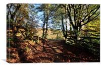 Autumn at Kilminorth Woods Looe Cornwall , Canvas Print