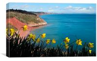 Turquoise sea and daffodils at Babbacombe Torquay, Canvas Print