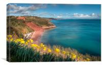 Daffodils on Babbacombe Downs Torquay, Canvas Print