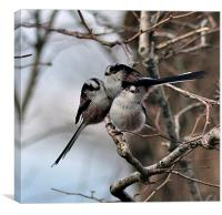 Long Tailed Tits on a winter's day, Canvas Print