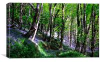 Bluebell Woods at Duloe near Looe in Cornwall, Canvas Print