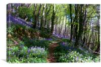 Pathway through the Bluebell Woods, Canvas Print