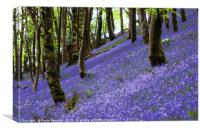 Bluebells on a hill, Canvas Print