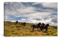 Ponies on Dartmoor, Canvas Print