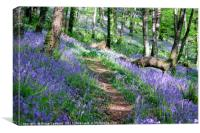 Bluebell wood in Cornwall, Canvas Print