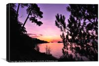 Sunrise at Meadfoot Beach  though  the fir trees, Canvas Print