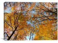Looking up at autumn, Canvas Print