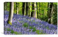Bluebells woods near to Looe in South East Cornwal, Canvas Print