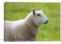profile of sheep, Canvas Print