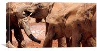 elephants at watering hole in africa, Canvas Print