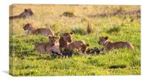 lion cubs around small watering hole, Canvas Print