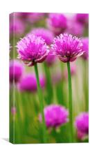 Double Chives, Canvas Print