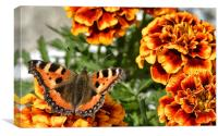 Colour coded butterfly !, Canvas Print