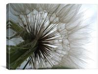 Dandelion to the Sky, Canvas Print