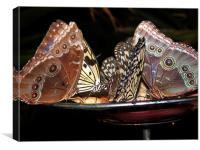 Butterflies Enjoying Dinner, Canvas Print