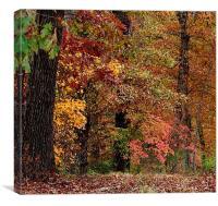 Colors1, Canvas Print