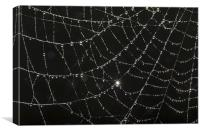 web of dew, Canvas Print