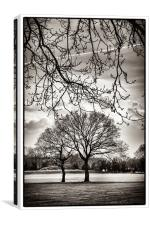 Urban Park trees, Canvas Print