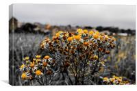 Wildflower on the Ffraw, Canvas Print