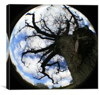Fisheye tree!, Canvas Print
