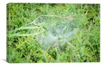 Morning dew on the spiders web, Canvas Print