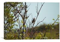 Perching bird, Canvas Print