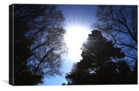 Sun through the trees, Canvas Print