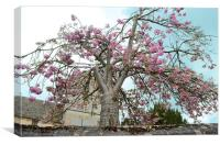 Blossom Tree, Canvas Print