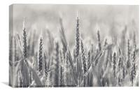 Ears of Wheat, Canvas Print