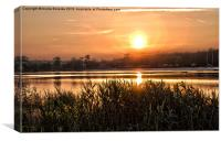 Local Sunset, Canvas Print