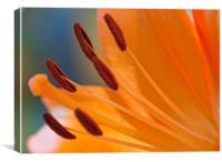 The Peach Lily, Canvas Print