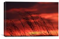 Grass Blowing In The Sunset, Canvas Print