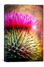 Thistle Be The Prickly One, Canvas Print